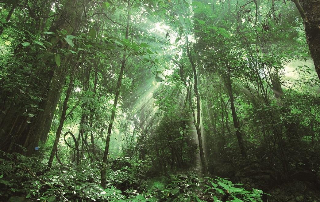 森林生态系统的主要类型、特点和生产力(一)
