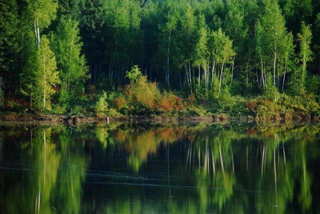 森林生态系统——森林生态系统的主要类型、特点和生产力(二)