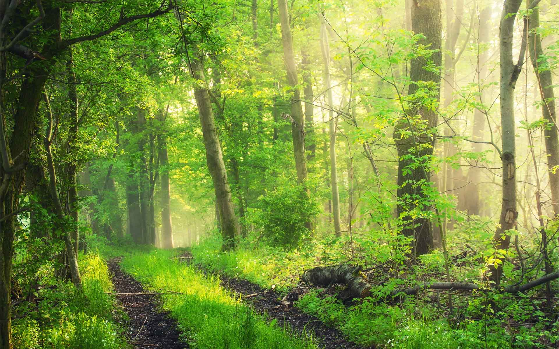 森林生态系统工作的新进展