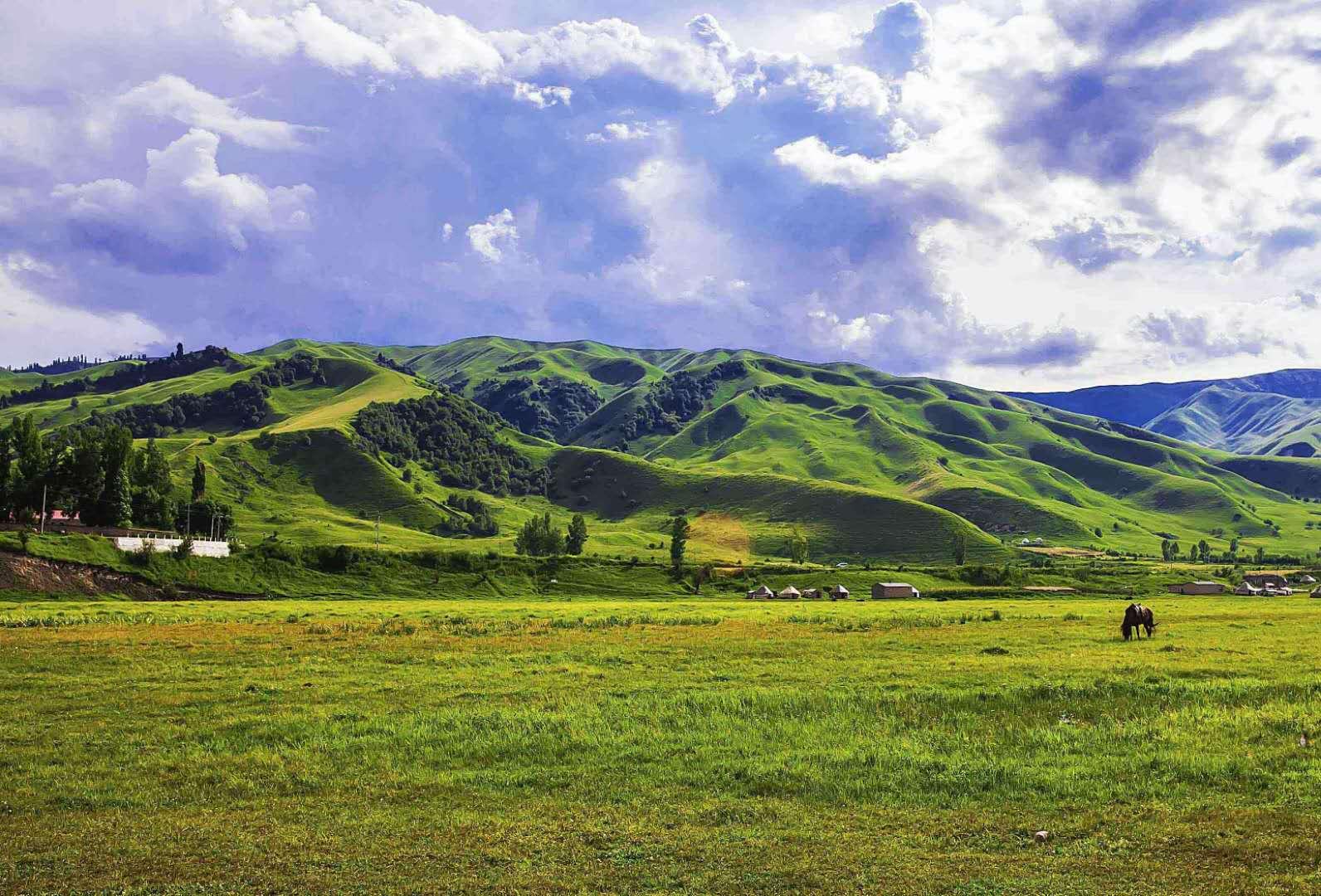 草原生态系统的分布、特点
