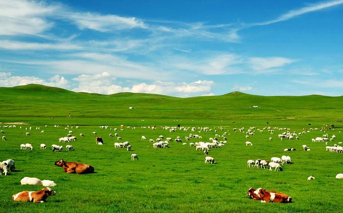 草原生态系统的结构和功能