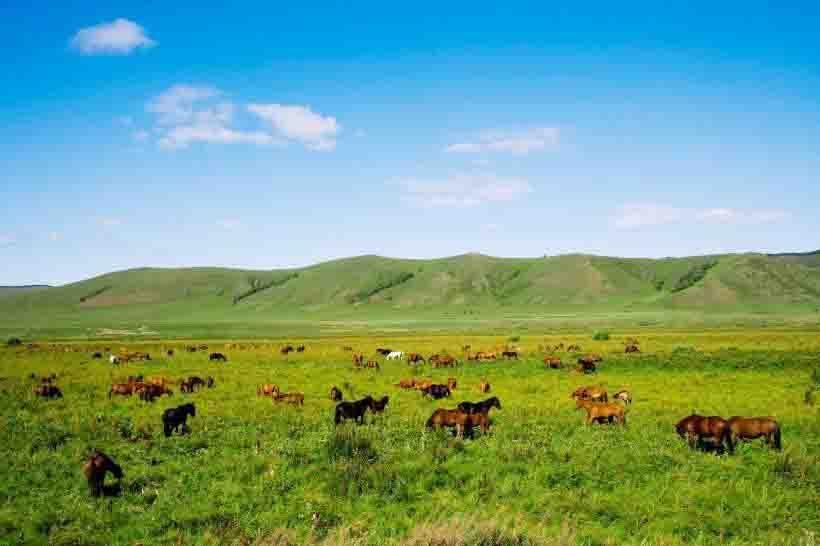 草原生态系统的可持续利用