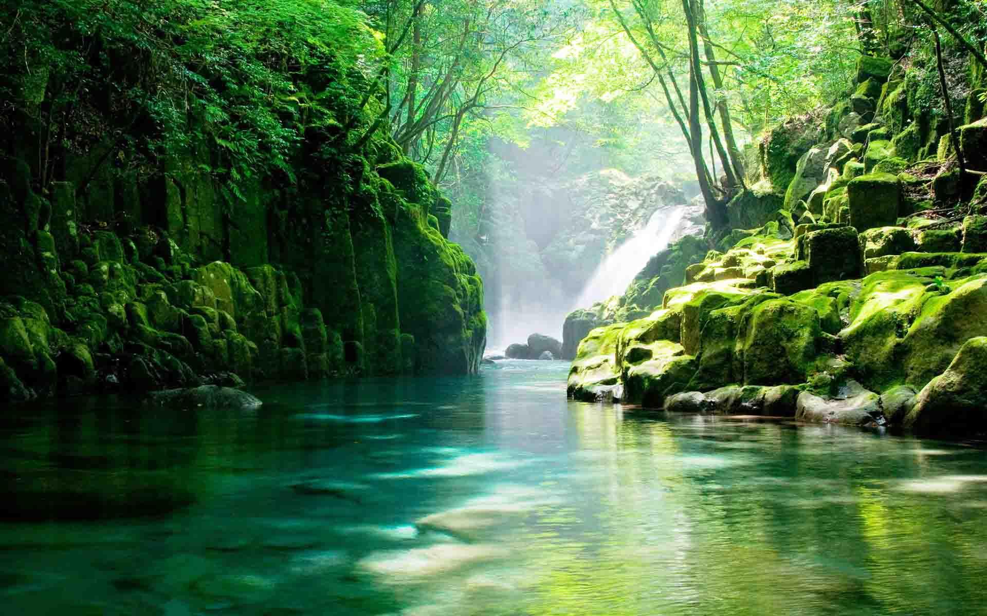 森林生态系统的主要特征