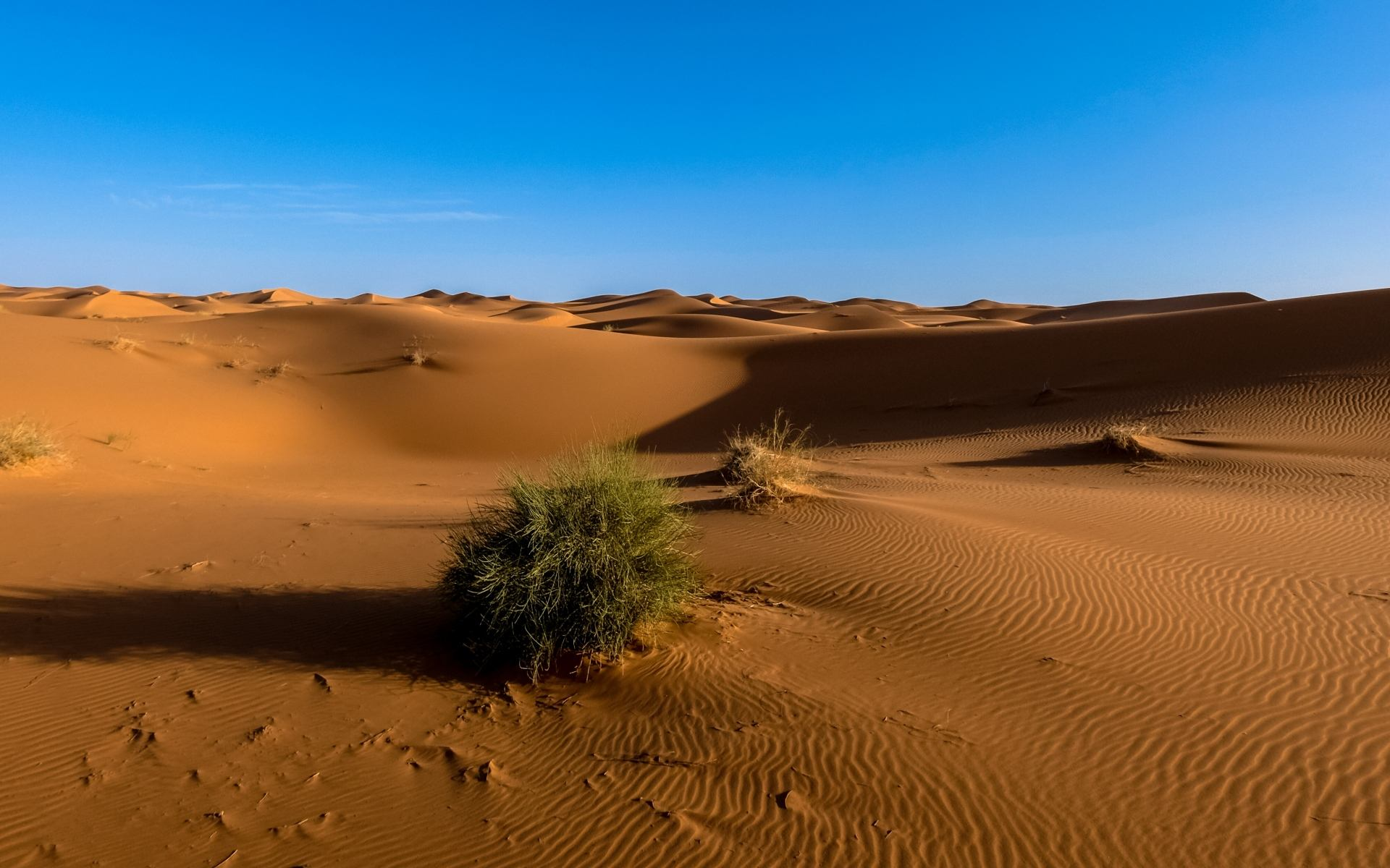 荒漠生态系统的结构与功能