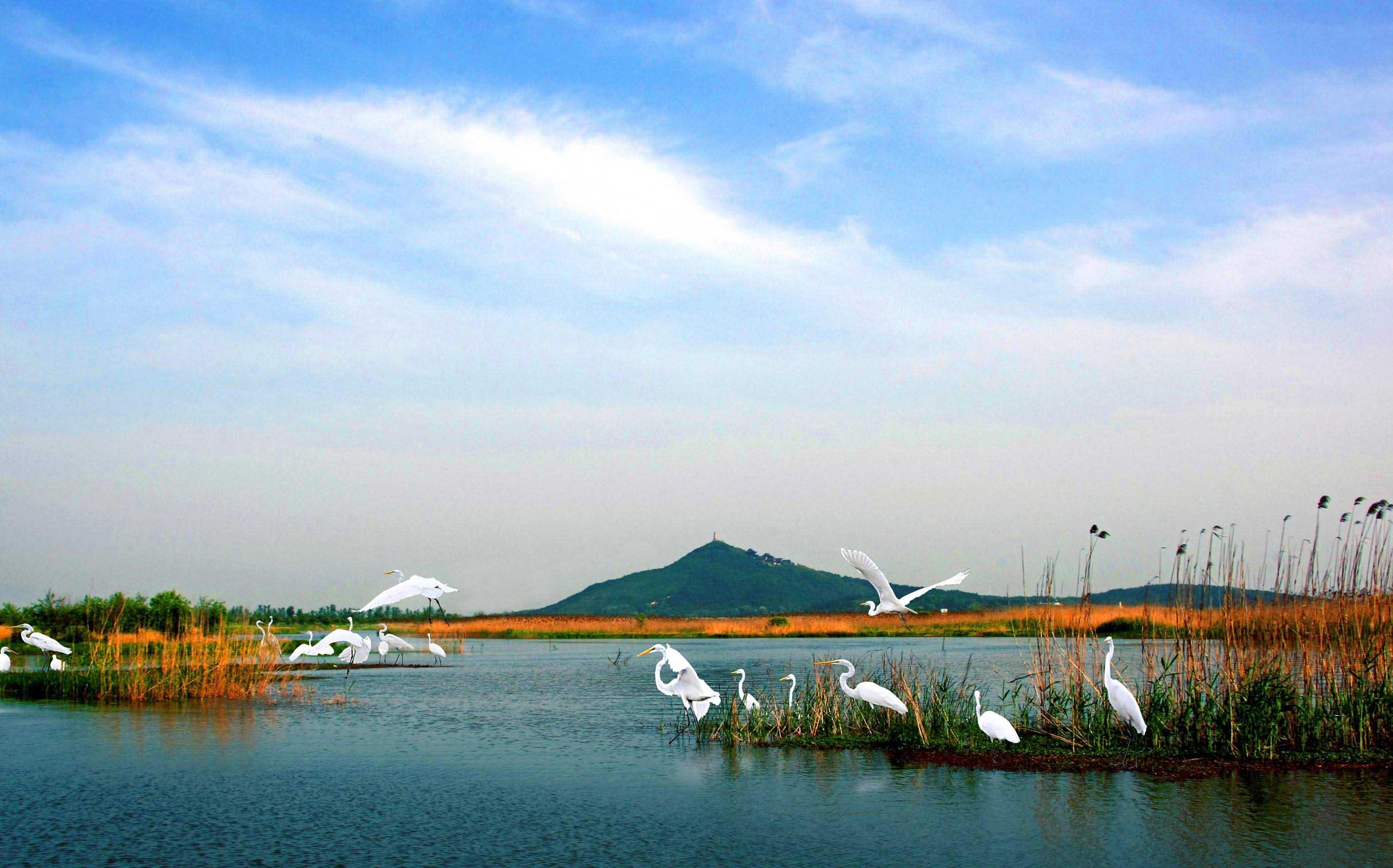 湿地分布、主要特点