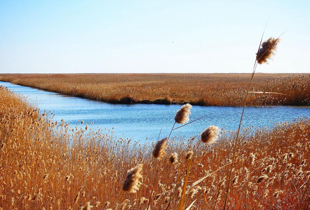 湿地生态系统的形成与演替