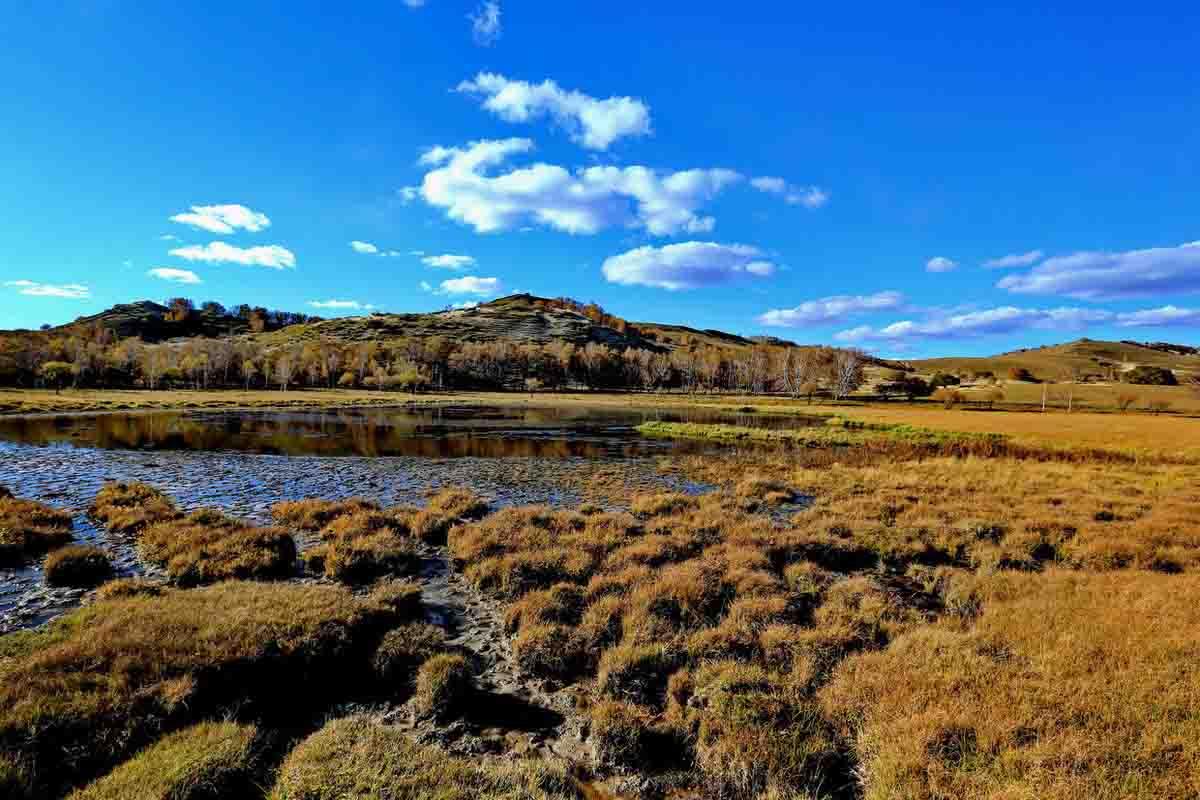 湿地生态系统的初级生产和物质循环