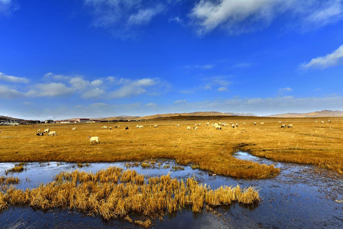 中国的湿地生态系统