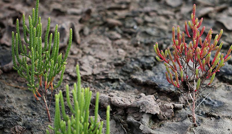 生态系统的发育和进化——生命的出现与生态系统的形成