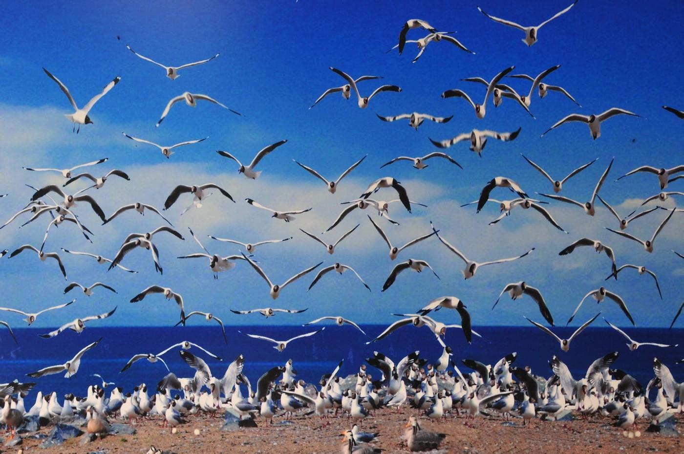 生态系统的物种流动——物种流的含义