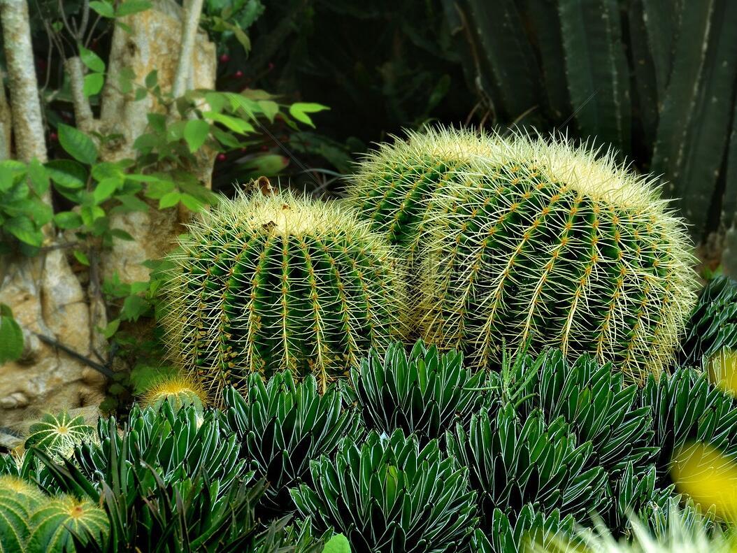生态系统的物种流动——生物入侵生态学