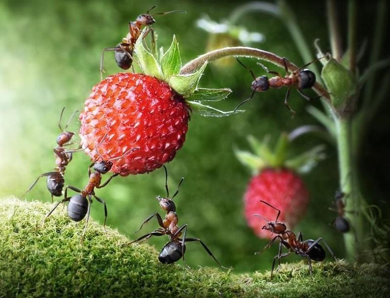 生态系统的物种流动——植物的种子流