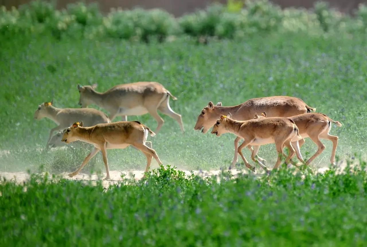 生态系统的物种流动——动物的迁移