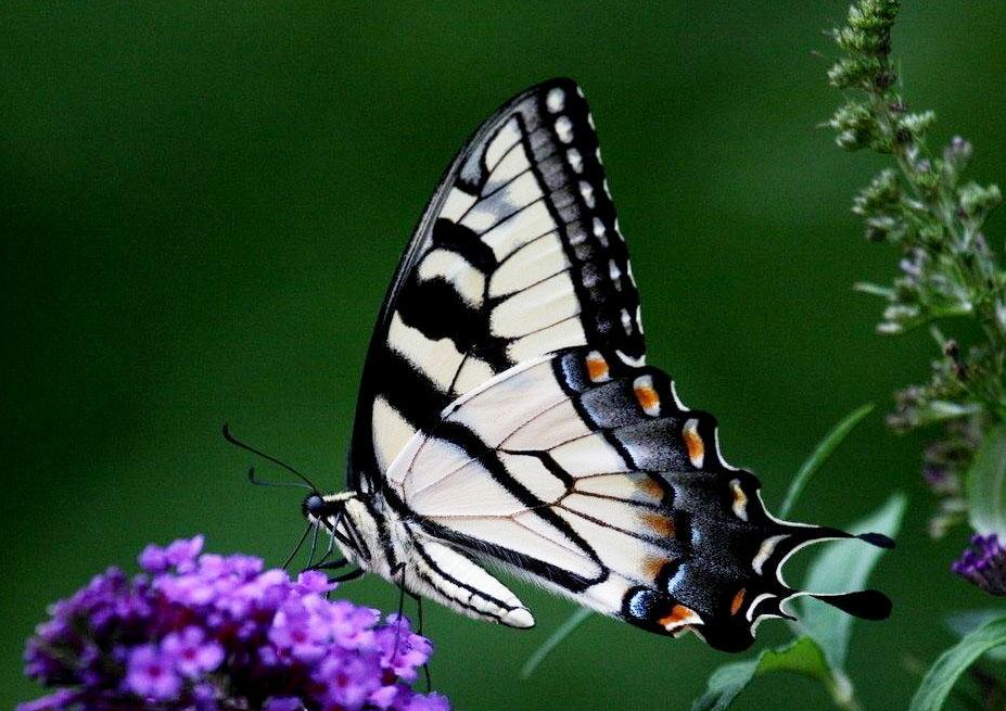 生态系统的物种流动——环境异质性是物种流动的生态因素